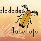Cladodes flabellata beetle by the vexed  muddler