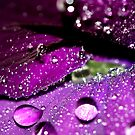 Velvet Sparkles by Sharon Johnstone