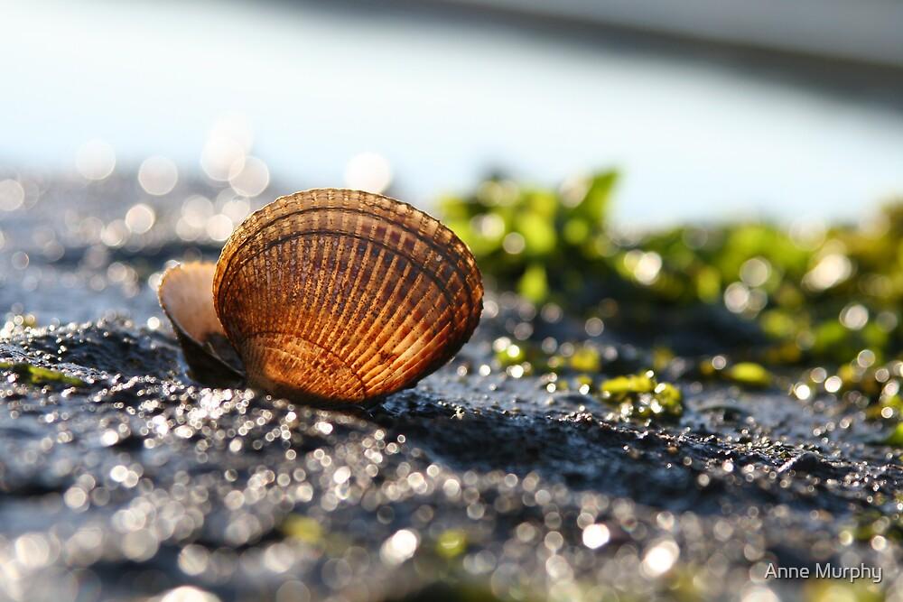 Golden glowing shell by Anne Murphy