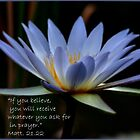 THE BLUE WATERLILY – Nymphaea nouchall by Magriet Meintjes