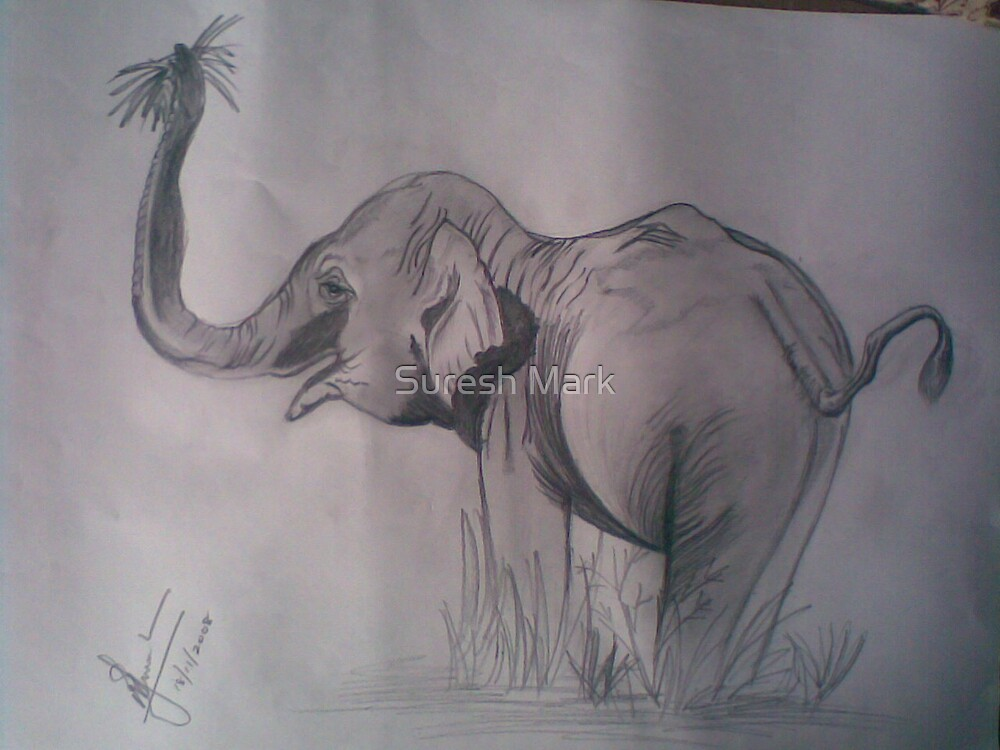 Art - Hungry Elephant by Suresh Mark