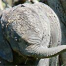 Nach einem Schlammbad, der Elefantenbaby - der afrikanische Elefant - Loxodonta Africana von Magriet Meintjes