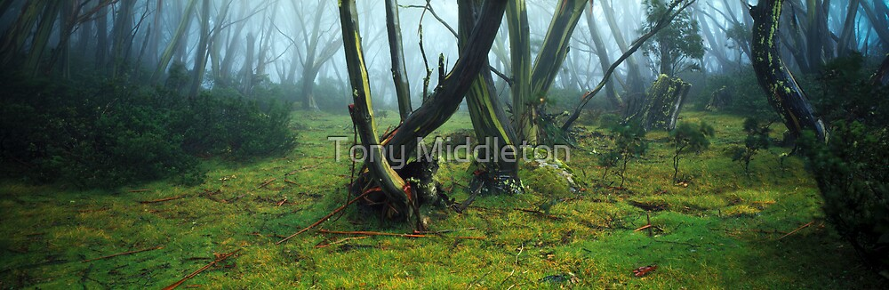 snowgum dreaming by Tony Middleton