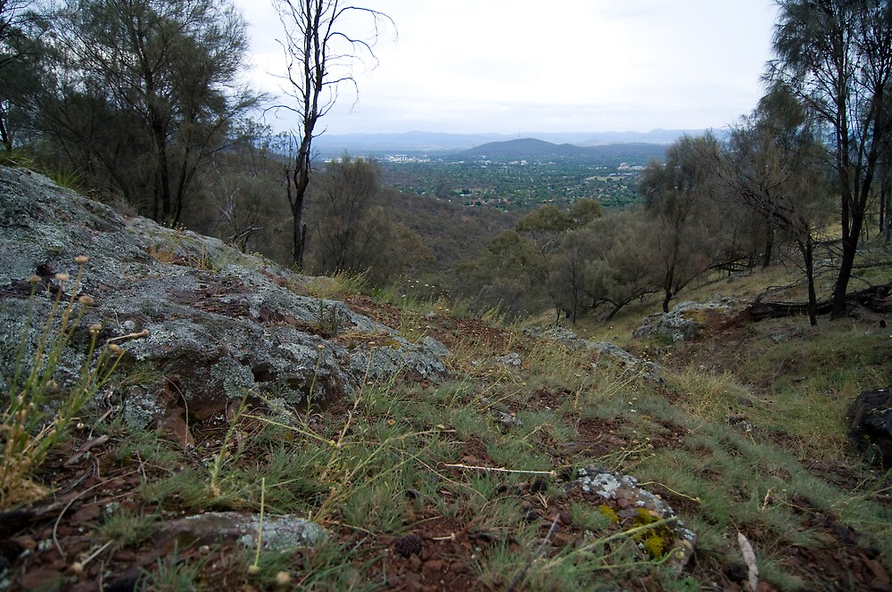 Last of the Spring blooms - Mt Majura by Greg Long