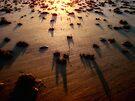 Shadows & Gold III by Duncan Waldron