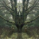 Mirror Tree 2 by somewherestudio