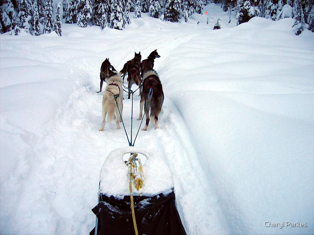 Dog Sledding by Cheryl Parkes