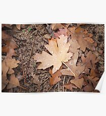 Maple leaf after the rain Poster