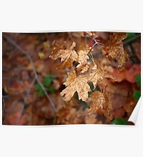 autumn leaves in the rain Poster