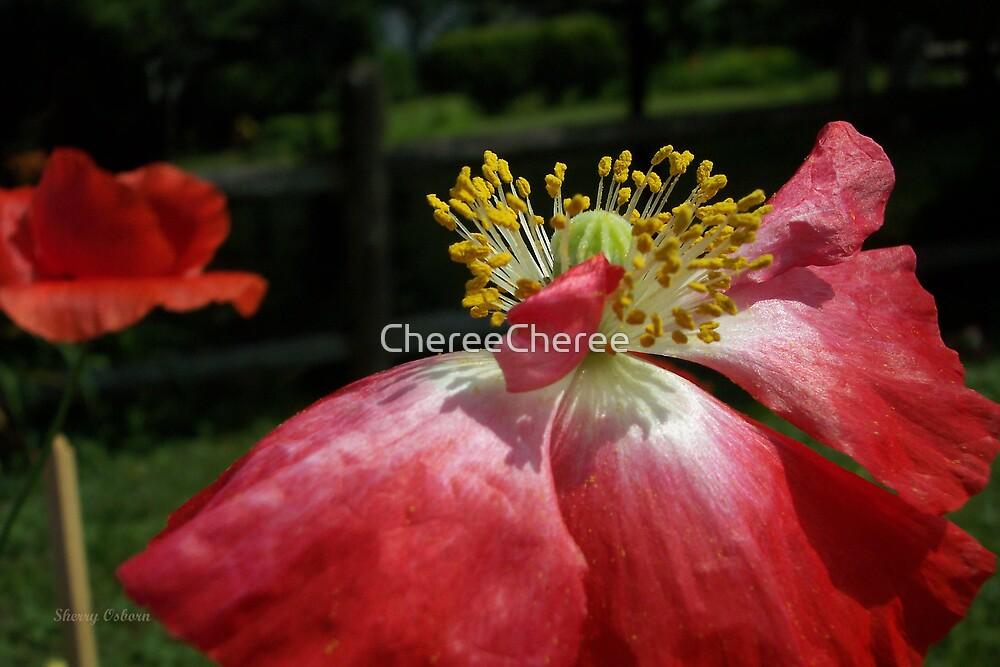Poppy by ChereeCheree