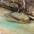 Watering Hole by danabee