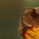 Leaf Face by robsta5