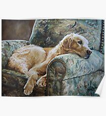 Golden Retriever in Chair Poster