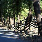 Fence street by Elizabeth Bravo