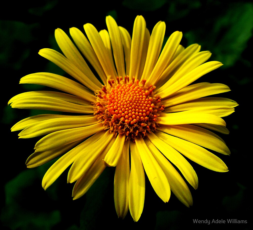 Yellow by Wendy Adele Williams