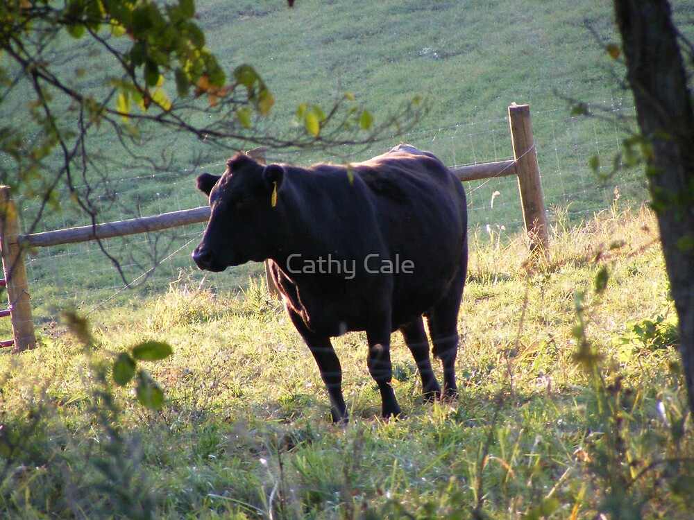Lone Cow by Cathy Cale