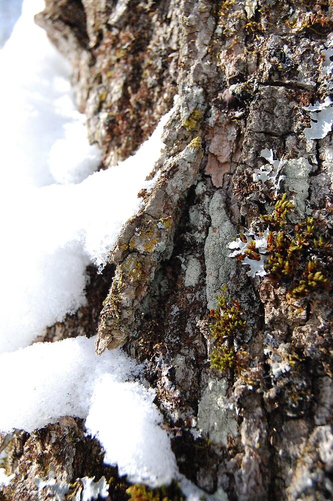 Tree by zachdier