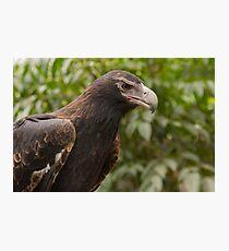 Raptor Rapture Photographic Print
