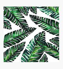 Live tropical II Photographic Print