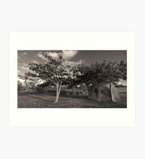 Landscape in Vieques, Puerto Rico Art Print
