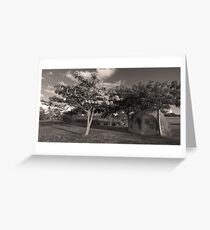Landscape in Vieques, Puerto Rico Greeting Card