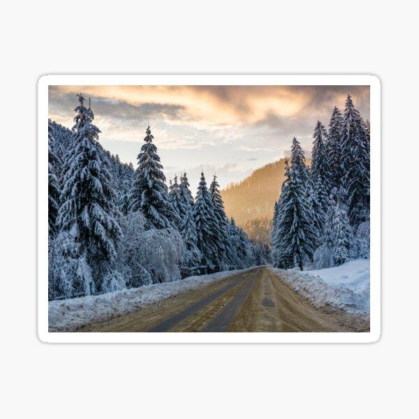asphalt road through spruce forest at sunset Sticker