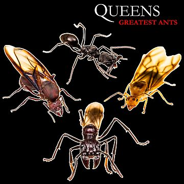 Queens - Greatest ants! by ArthroLove