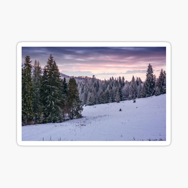 spruce forest on a snowy hillside at dusk Sticker