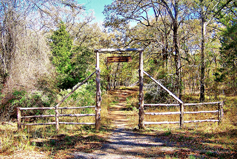 Nature Trail by Glenna Walker