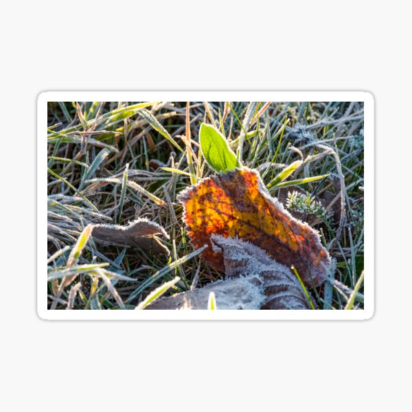 fallen foliage on a green grass covered with frost Sticker