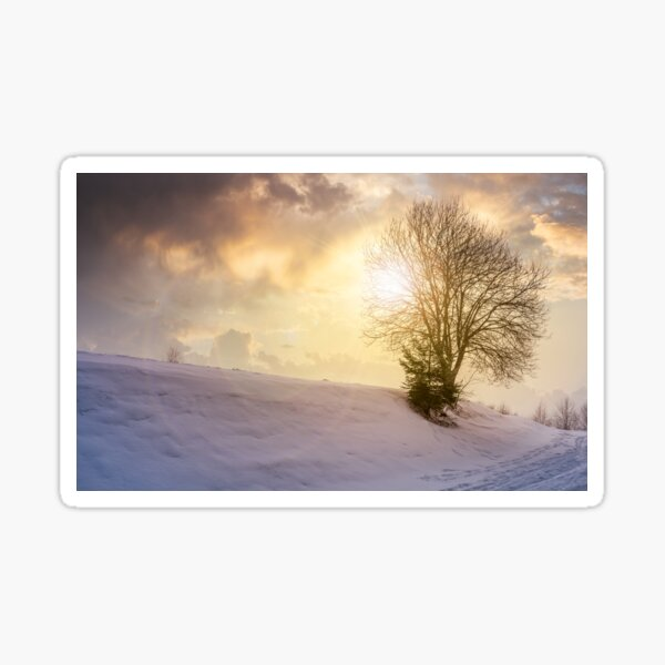 leafless tree on snowy slope at sunset Sticker