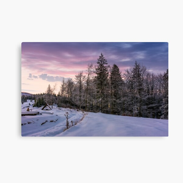 forest in hoarfrost on snowy hillside at dawn Canvas Print