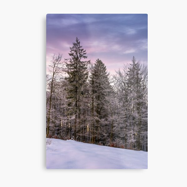 forest in hoarfrost on snowy hillside at dawn Metal Print