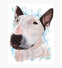 Sasha - Bull Terrier Photographic Print
