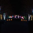 Christmas Garden 6 by Rodney Lee Williams