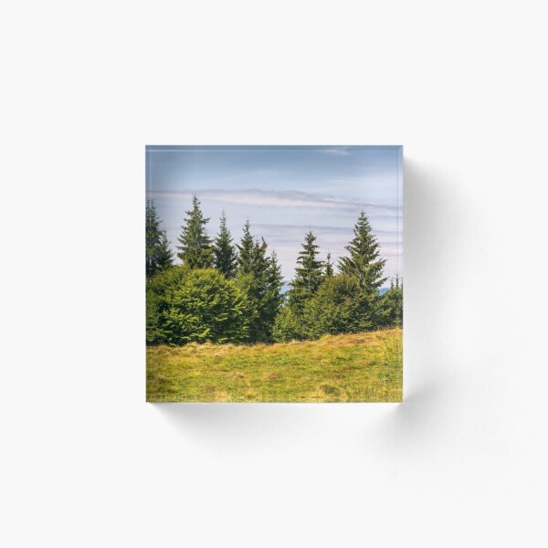 spruce forest on a grassy meadow Acrylic Block