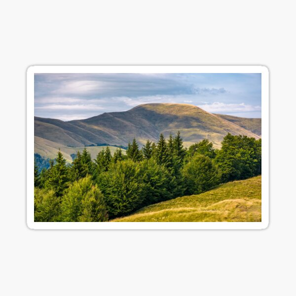forested hillside of Svydovets mountain ridge Sticker