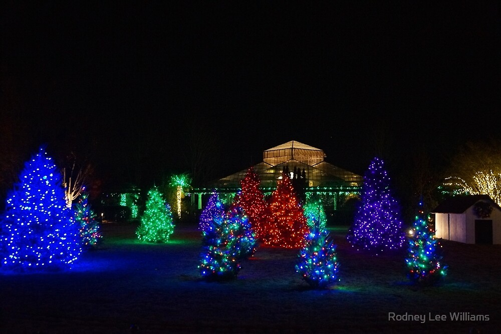 Christmas Garden 7 by Rodney Williams