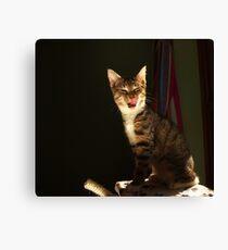 Tabby kitten licking lips Canvas Print