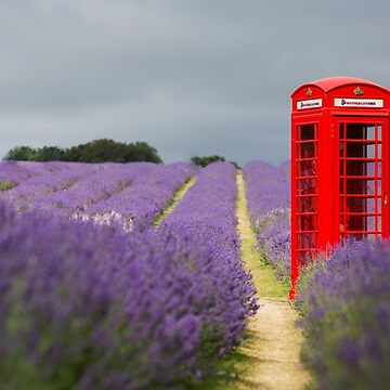 Phone box in Mayfield lavender fields by Kerto