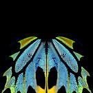 Cairns Birdwing Detail II by Didi Bingham
