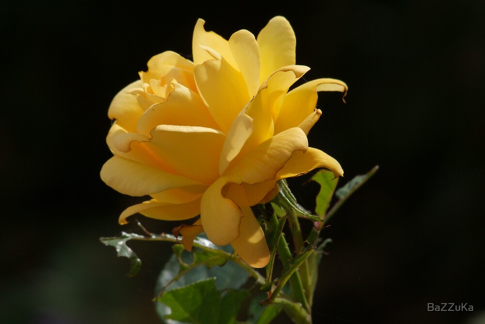 Yellow rose by BaZZuKa