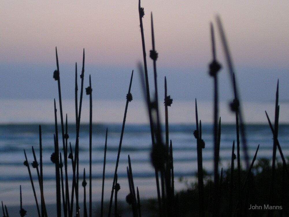 Reeds on the beach by Johnnie