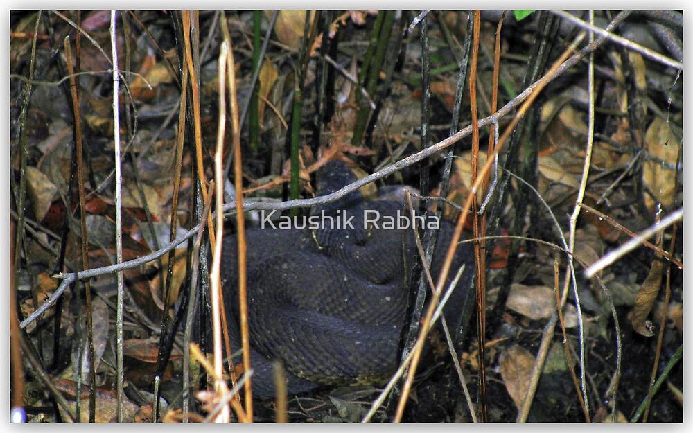 The snake by Kaushik Rabha