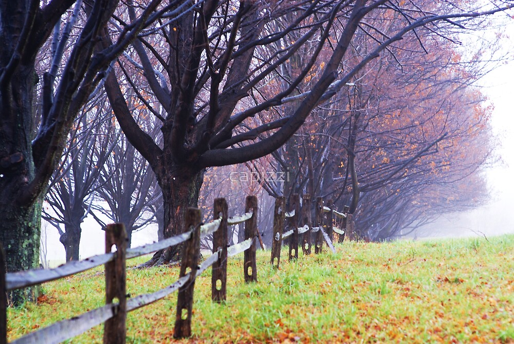 Fence Line by capizzi