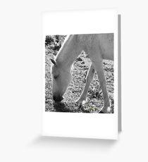 Grey Arabian Mare Greeting Card