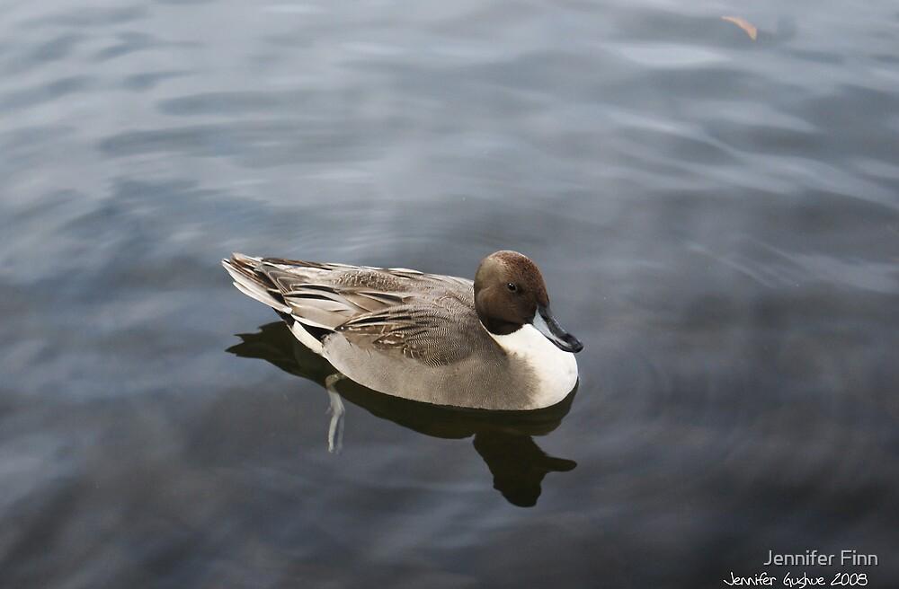 Grey Duck by Jennifer Finn
