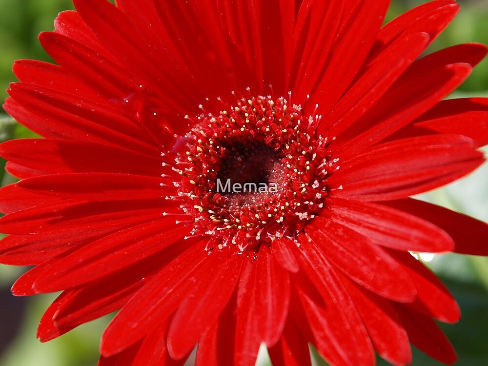 Red Flower by Memaa