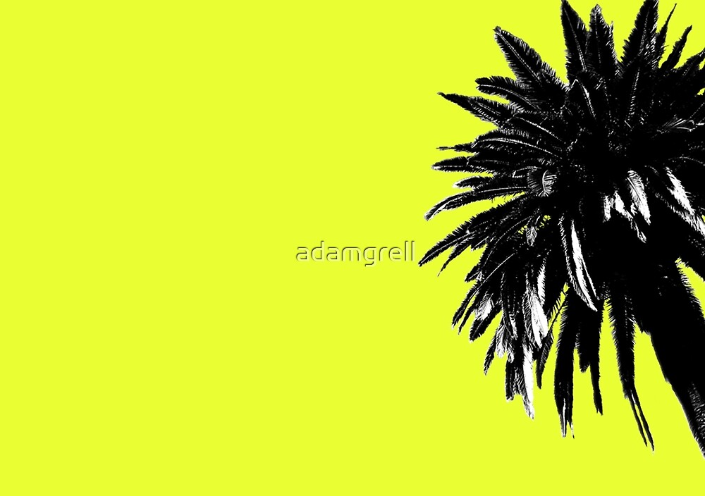 Palm Tree by adamgrell