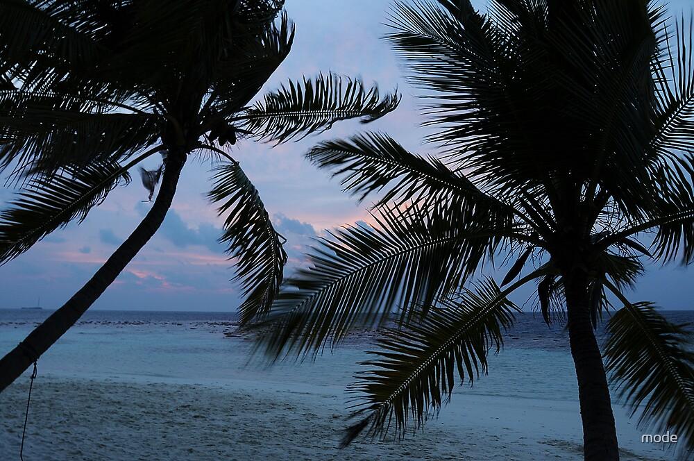 black palms by mode